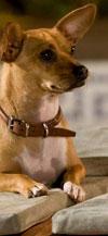 ראיתם פעם כלבים צופים בסרט?