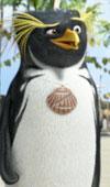 אש יא (פינגווין) גולש - ביקורת DVD