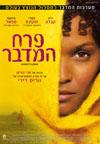 פרח המדבר – עכשיו בקולנוע