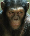 דיווח שישי באקרנים: כוכב הקופים לא רוצה לרדת