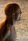 עמוק ומרגש – רמפארט – ביקורת סרט