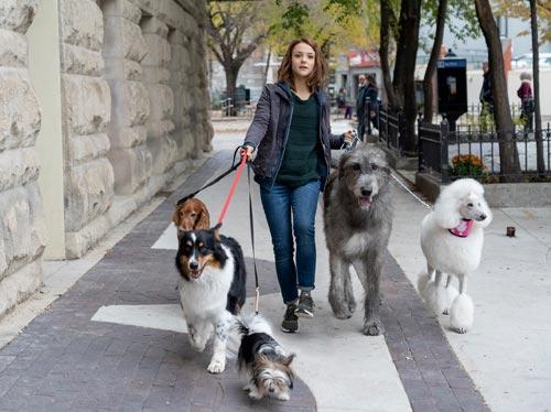 לראשונה בישראל: הקרנה תחת כיפת השמיים לכלבים ולבעליהם
