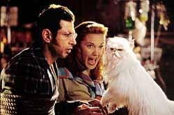 Loading Cats & Dogs Pics 1 -  תמונה מספר 1 מהסרט כלבים נגד חתולים ...