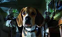 Loading Cats & Dogs Pics 2 -  תמונה מספר 2 מהסרט כלבים נגד חתולים ...
