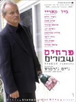 סרטי פורנו ישראלי שרון סטון סרטים